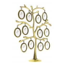 FT29 Drzewko genealogiczne
